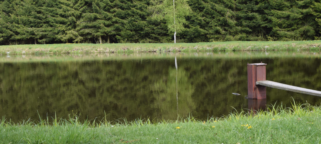 rybník, plavání